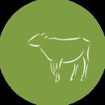 Milchaustauscher / Kälberfutter
