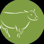 Milchvieh - Bio-Milchleistungsfutter